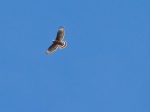 Hawk seen on our hike in Chico